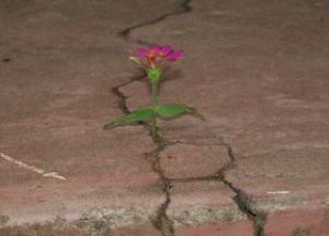 fiore nella roccia